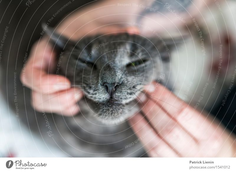Joker Face Cat Woman Nature Beautiful Hand Relaxation House (Residential Structure) Animal Adults Gray Friendship Elegant Stand Creativity Fingers