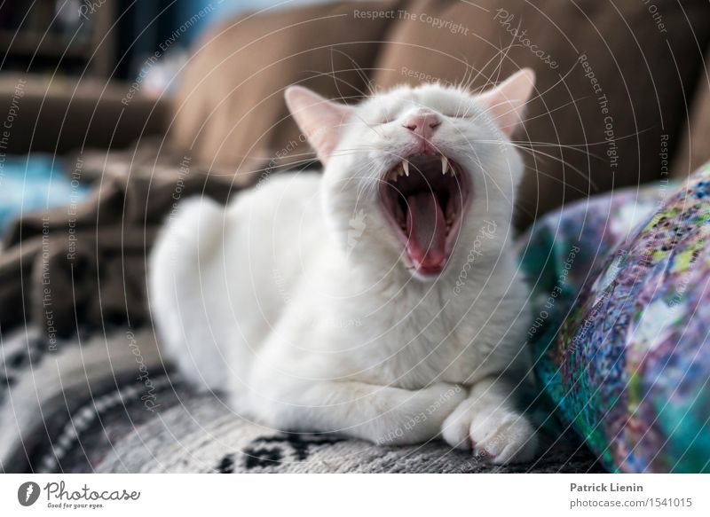Hundsmüde Cat Nature Beautiful White Relaxation Calm House (Residential Structure) Animal Face Friendship Wild Esthetic Crazy Uniqueness Cute Teeth