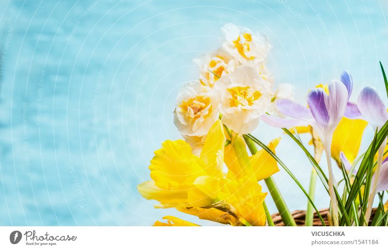 Nature Plant Flower Leaf Yellow Blossom Spring Style Garden Feasts & Celebrations Design Decoration Birthday Blossoming Easter Bouquet