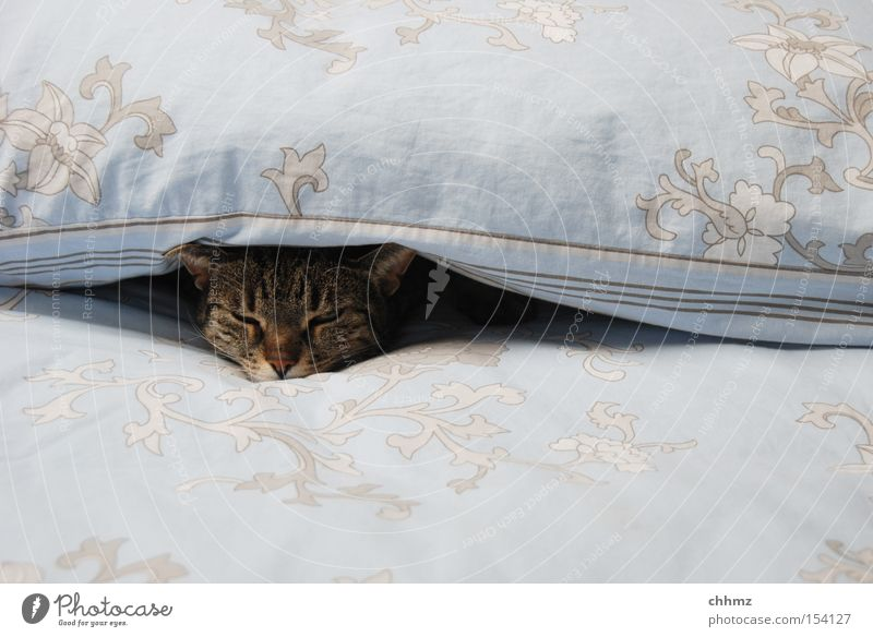 doze Bed Warmth Cat Sleep Cuddly Soft Domestic cat Cozy Doze Mammal Cat's head Contentment Serene Comfortable 1 Cover up Interior shot Deserted