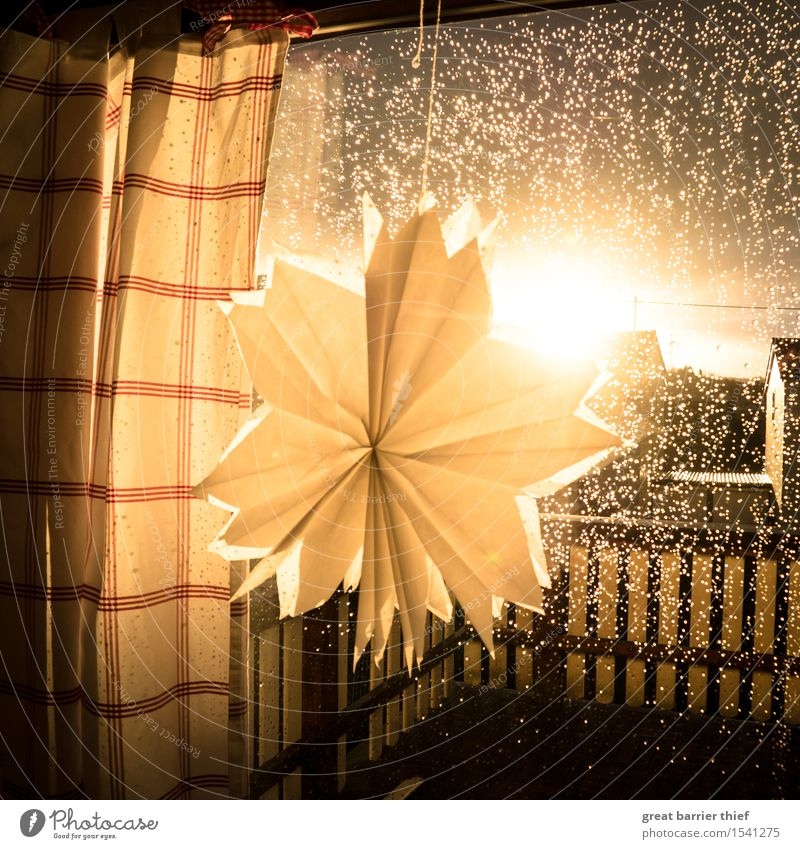 Paper flower in the rain dance Glass Brown Multicoloured Yellow Gold Red Paper rose Window Rain Drape Room Looking Observe Glittering Balcony Colour photo