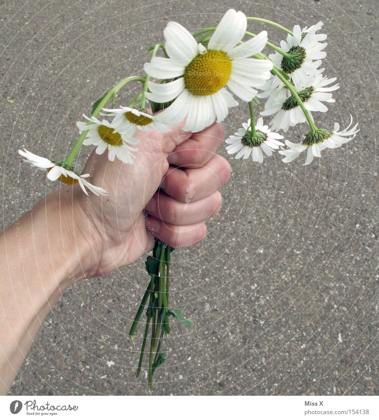 Hand Flower Plant Summer Spring Gift Broken Fatigue Bouquet Hang Daisy Marguerite Valentine's Day Lifeless Limp