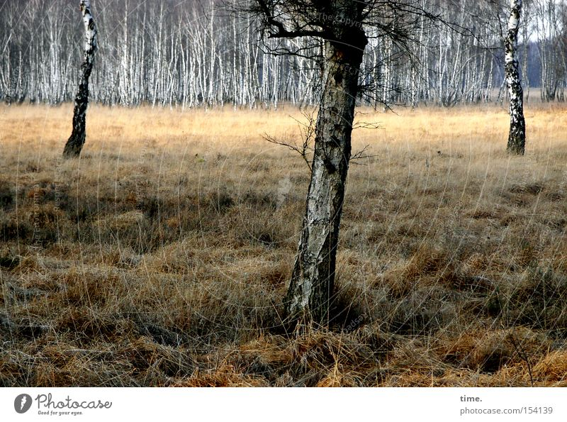 Nature Old Plant Tree Landscape Winter Environment Emotions Grass Wood Gloomy Multiple 3 Transience Network Decline