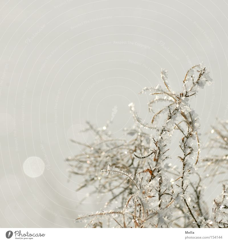 The Snow Queen was there Environment Nature Plant Winter Ice Frost Crystal Glittering Bright Cold Natural White Hoar frost Colour photo Exterior shot Deserted