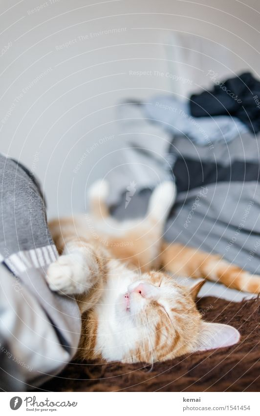 Cat Relaxation Calm Animal Flat (apartment) Dream Lie Living or residing Cute Sleep Bed Serene Pelt Fatigue Pet Animal face