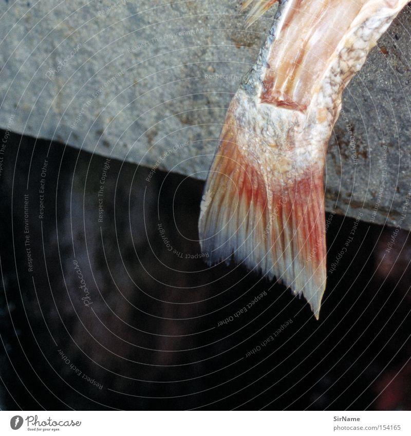 48 [catching the tail end] Meat Fish Nutrition Gastronomy Concrete Death End Transience Fish market Molt Fish bone Killing Pork tenderloin gut fillet