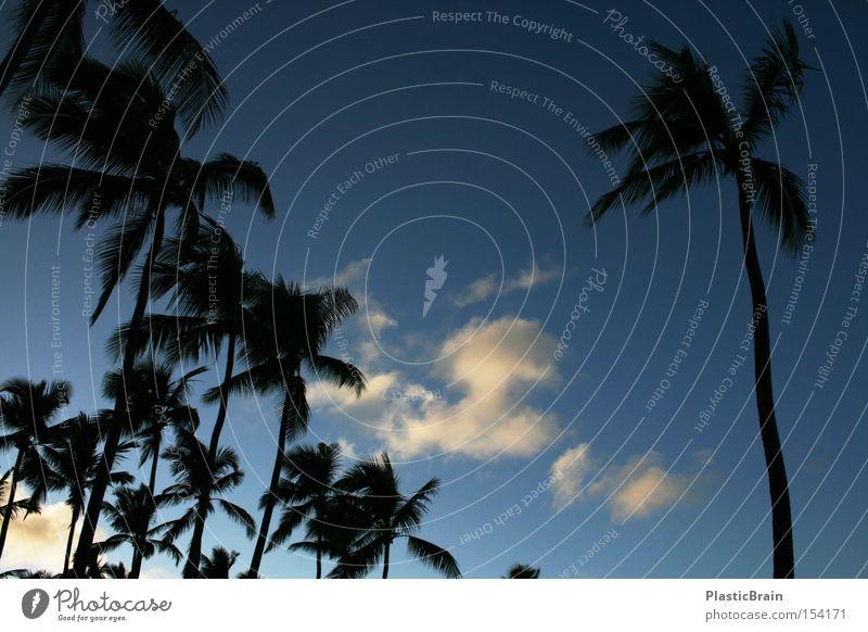 solitariness Palm tree Back-light Sky Blue Tropical Clouds Silhouette Blue sky Upward Worm's-eye view Skyward Twilight
