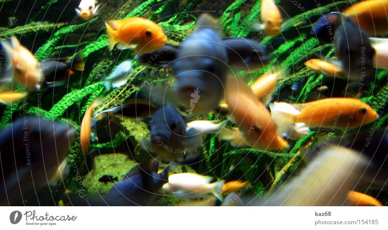 Water Ocean Nutrition Life Lake Fish Multiple Dive Many Aquarium Agree Reef Float in the water
