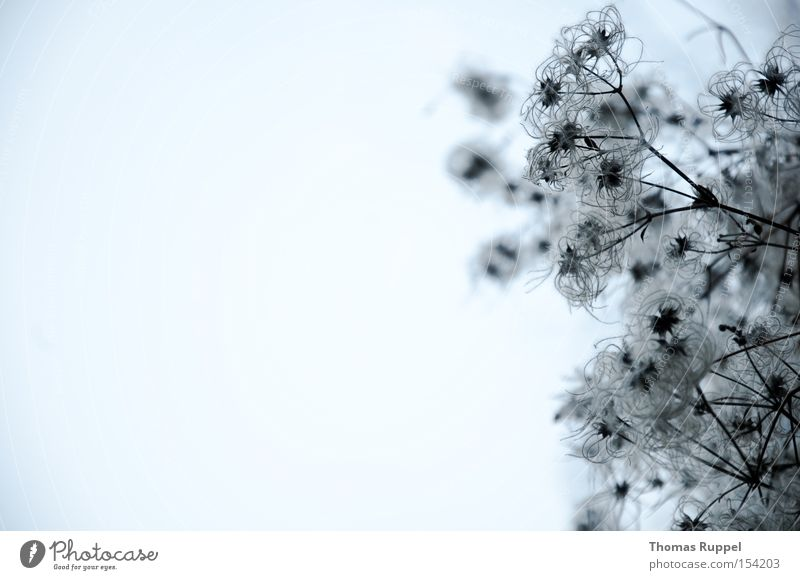 Nature White Plant Winter Cold Snow Bright Grief Frost Bushes Distress Freeze Frostwork December Foliage plant February