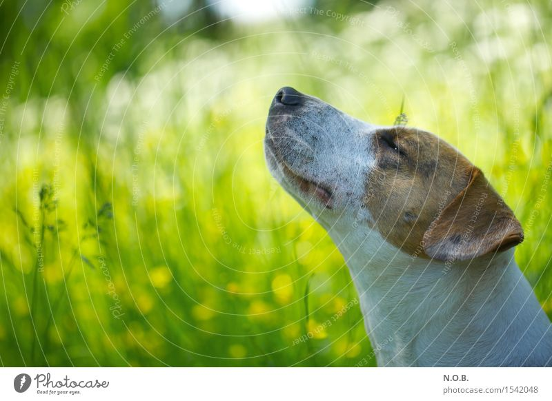It smells like spring. Nature Sunlight Spring Summer Beautiful weather Flower Grass Animal Dog 1 To enjoy Fresh Happy Bright Green Contentment