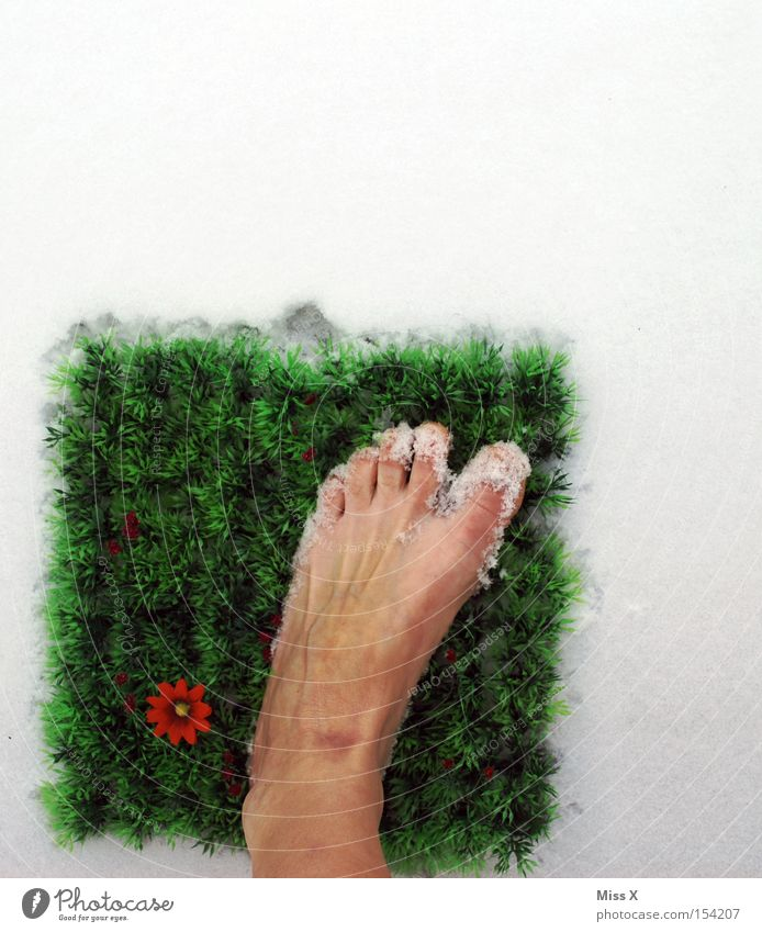 Flower Green Winter Cold Snow Grass Spring Feet Wet Lawn Square Freeze Toes Death Freeze to death
