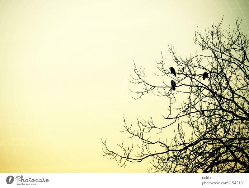 Sky Tree Winter Cold Emotions Bird Flying Sit Raven birds Crow Mythology