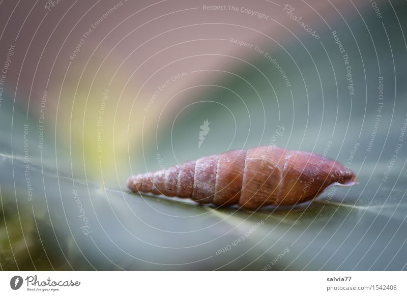 dream cottage Nature Plant Leaf Snail Lie Esthetic Exceptional Simple Brown Green Calm Loneliness Design Whimsical Surrealism Structures and shapes Pastel tone