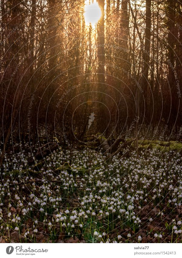 Nature Plant Green White Tree Sun Flower Calm Forest Blossom Spring Brown Moody Growth Idyll Blossoming