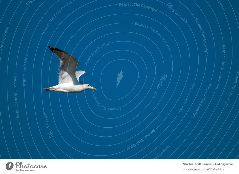 Sky Nature Vacation & Travel Blue White Sun Ocean Animal Environment Natural Movement Coast Freedom Flying Bird Weather