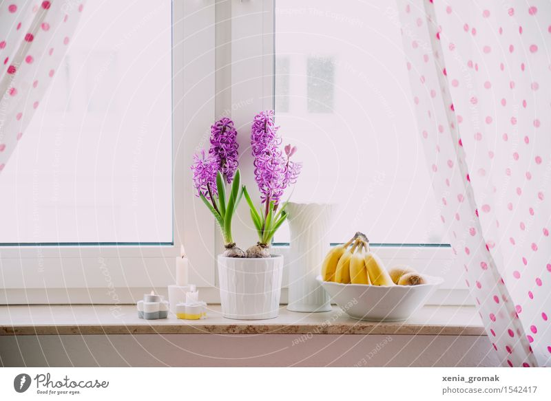 hyacinths Food Fruit Breakfast Lunch Organic produce Vegetarian diet Diet Bowl Lifestyle Healthy Eating Harmonious Well-being Easter Blossoming Esthetic Spring