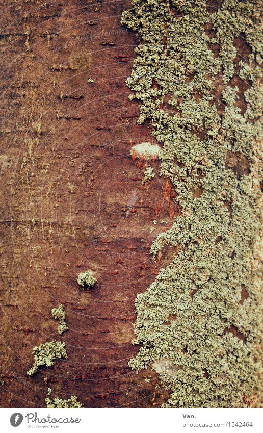 Divided Personality Nature Plant Autumn Tree Moss Tree trunk Lichen Brown Green Tree bark Wood Colour photo Subdued colour Exterior shot Close-up Detail