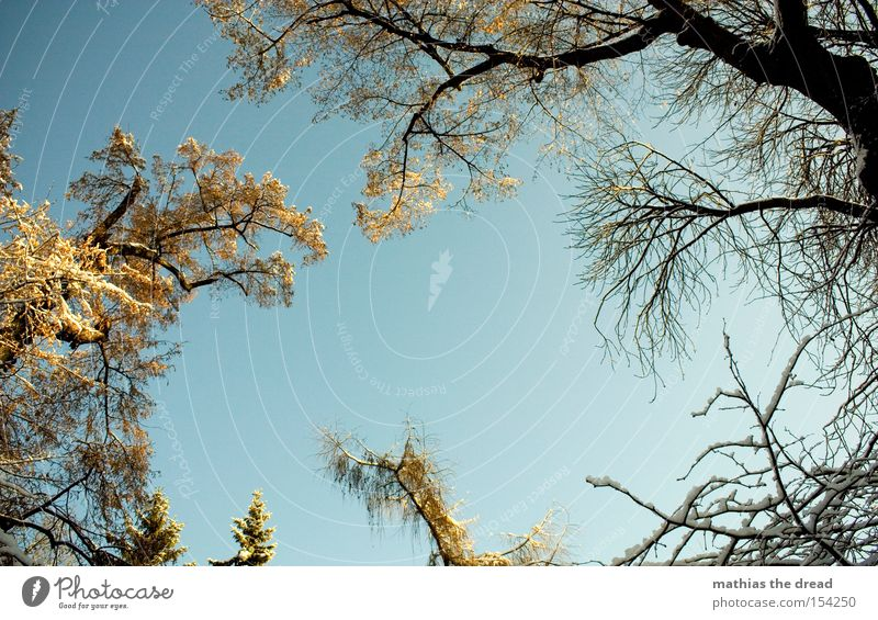 Beautiful Sky Tree Winter Leaf Snow Branch Idyll Beautiful weather Treetop Bleak