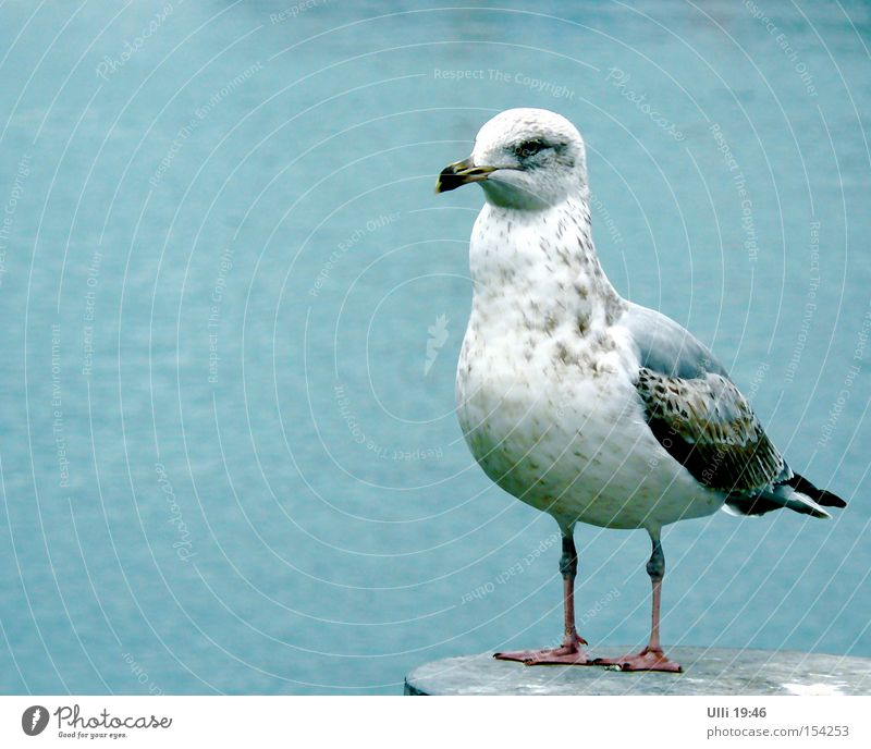 Blue Beautiful Water Ocean Calm Animal Gray Bird Wild animal Stand Wait Speed Wing Curiosity Near Watchfulness