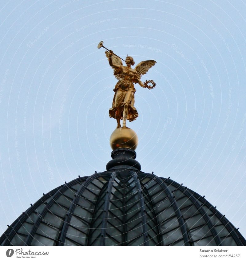 Sky Art Gold Gold Academic studies Roof Culture Dresden Historic River bank Pigeon Elbe Old town Gallery Education Bird
