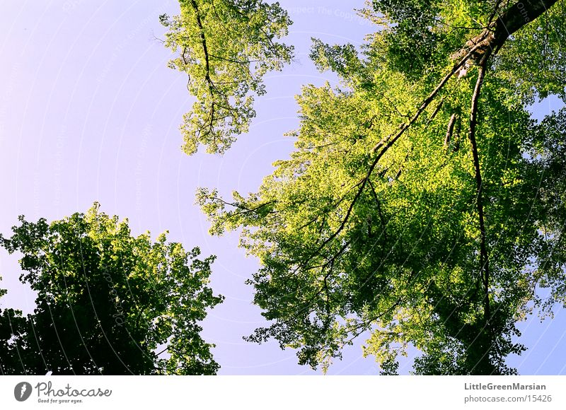 soo high Tree Leaf Green Blue Blue sky Beautiful weather Upward