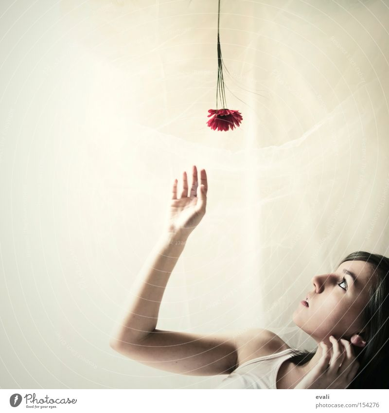 Flowers are red Portrait photograph Red Hand Woman Upward Catch