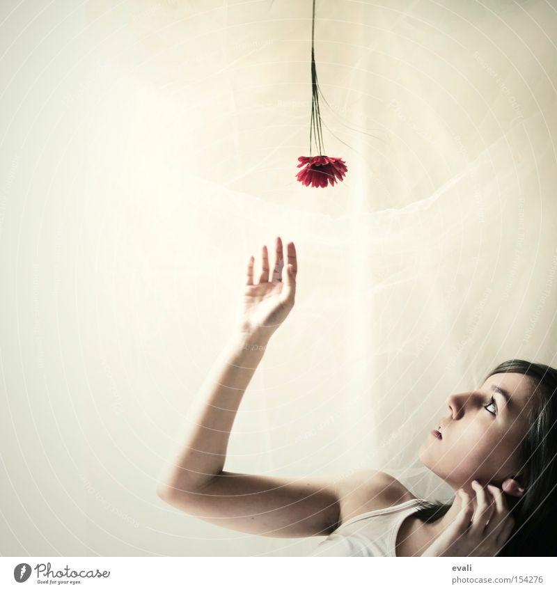 Woman Hand Flower Red Portrait photograph Catch Upward