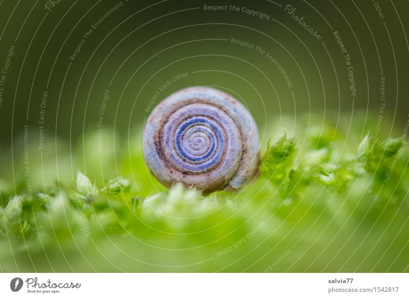 round thing Nature Plant Animal Earth Spring Autumn Moss Forest Wild animal Snail 1 Esthetic Near Round Soft Gray Green Moody Calm Loneliness Idyll Change
