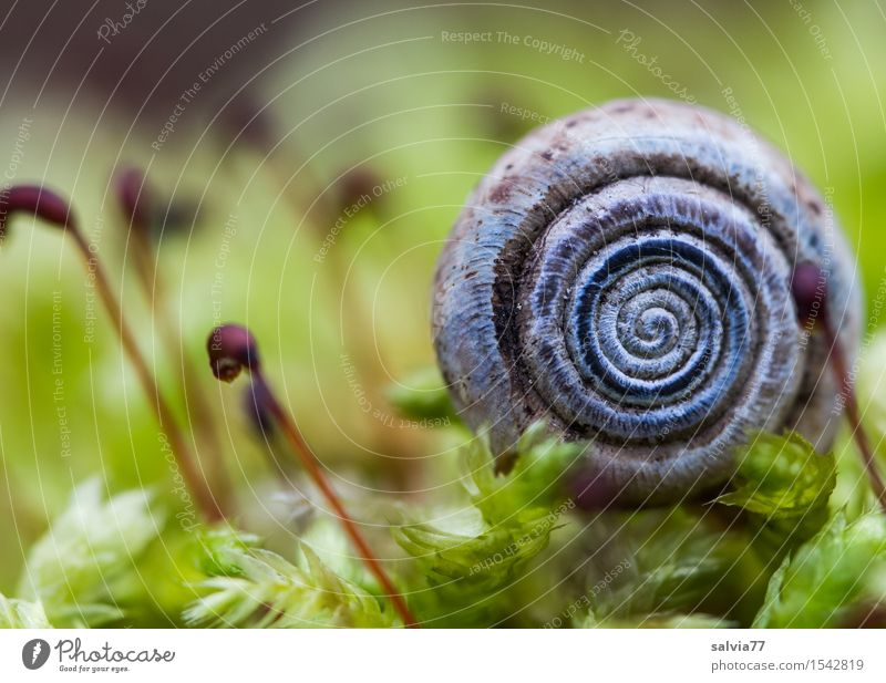 little cottage Environment Nature Plant Animal Earth Spring Autumn Moss Foliage plant Forest Wild animal Snail Snail shell 1 Natural Round Soft Green Protection