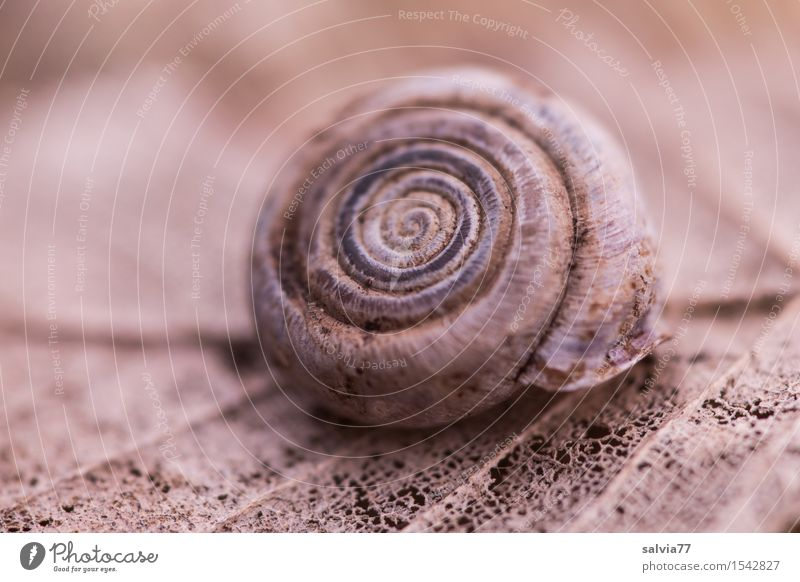 Ephemeral Environment Nature Plant Animal Earth Autumn Leaf Forest Wild animal Snail Snail shell 1 Round Brown Gray Loneliness Life Death Decline Transience