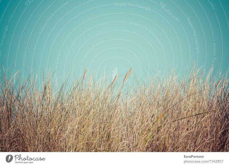 Sky Nature Vacation & Travel Plant Blue Summer Beach Environment Autumn Spring Grass Brown Air Cloudless sky Dune Marram grass