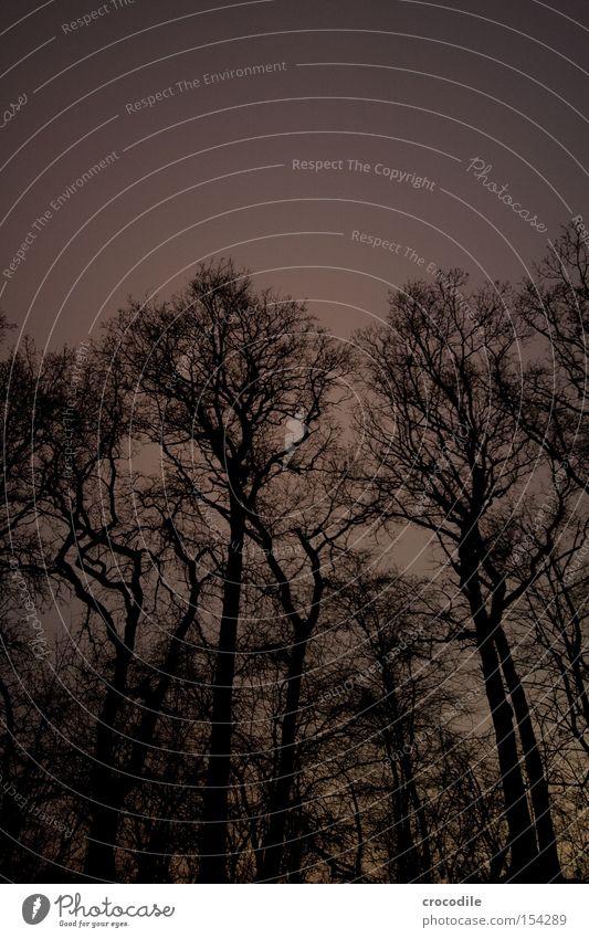 Solanaceous plant Tree Branch Wood Night Dark Alarming Fear Panic Long exposure Dangerous Treetop