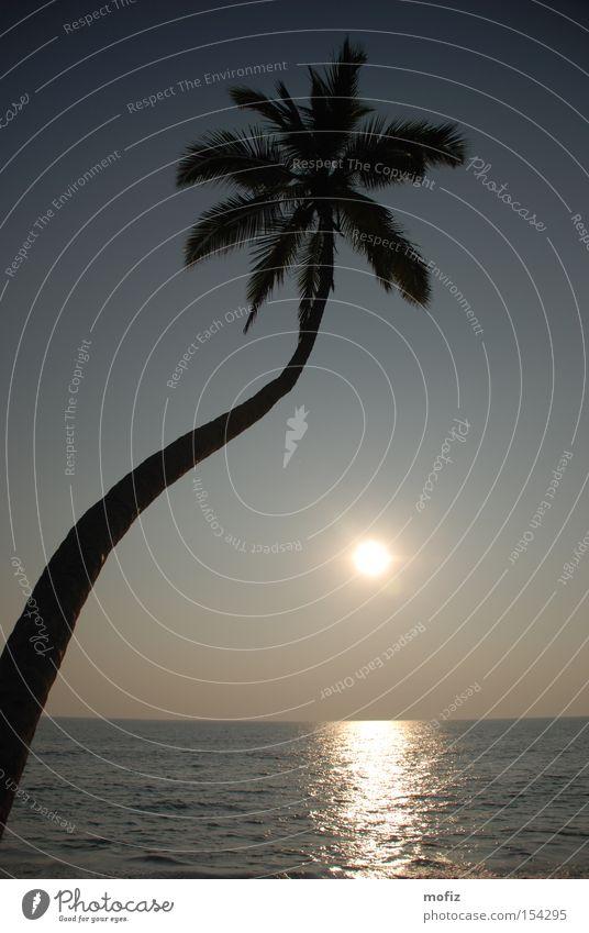 Sun Ocean Beach Vacation & Travel India Palm tree Idyllic beach Kerala Arabian Sea