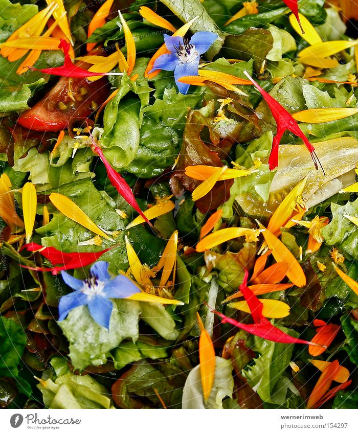 Rainbow Vitamins Lettuce Green Nutrition Borage Marigold Blossom Natural garden Vegetarian diet Multicoloured Healthy Blossom leave Calorie Gastronomy Food