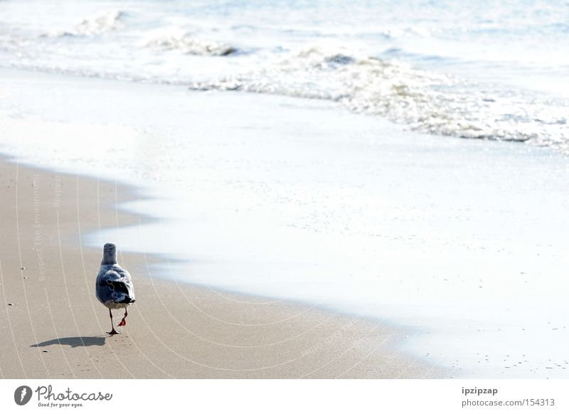 Water White Ocean Beach Vacation & Travel Loneliness Animal Dream Think Sand Bird Coast