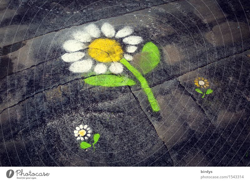 flat-roofed melange Flower Graffiti Flowery pattern Daisy Blossoming Fragrance Esthetic Exceptional Friendliness Cute Positive Beautiful Feminine Joy