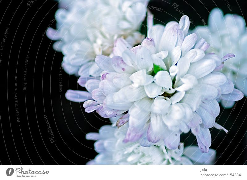 Nature Beautiful White Flower Plant Summer Black Blossom Blossoming Blossom leave Splendid