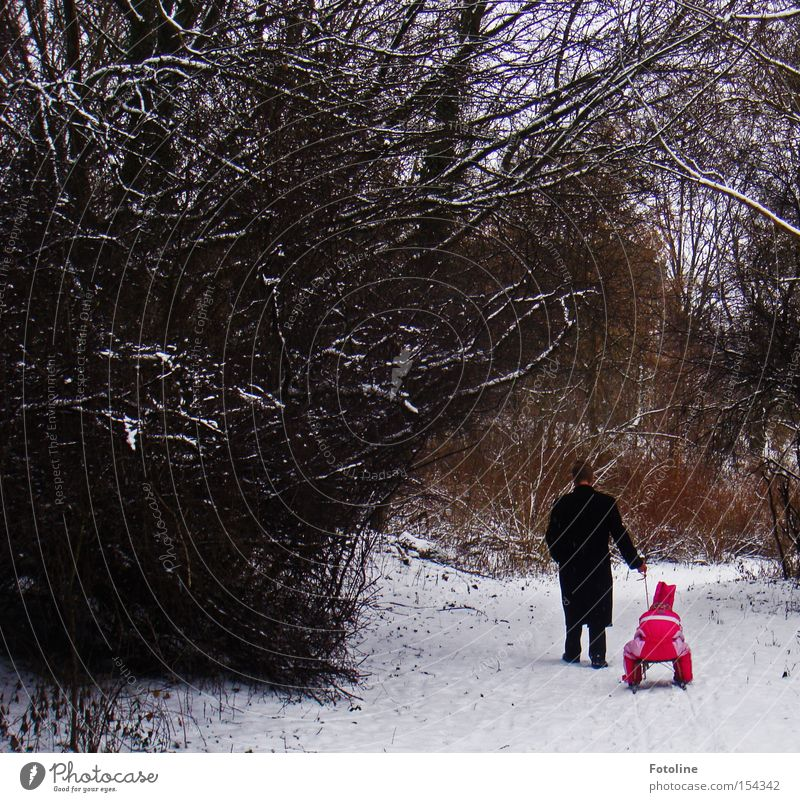 Child Man Tree Red Girl Winter Forest Cold Snow Branch Footpath To go for a walk Father Promenade Pull Family & Relations