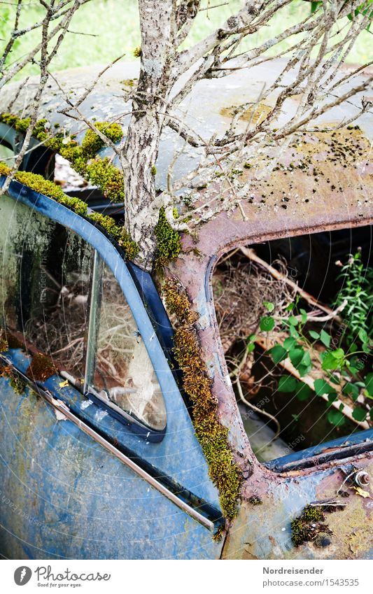 Nature City Old Plant Tree Senior citizen Time Metal Car Transport Power Technology Transience Sign Broken Change