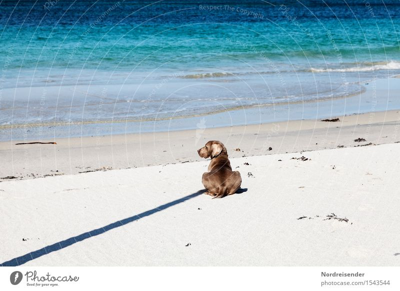 Dog Nature Summer Water Ocean Landscape Animal Far-off places Beach Freedom Sand Fresh Happiness Wait To enjoy Beautiful weather