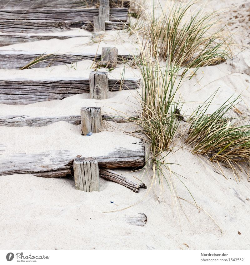 in the dunes Vacation & Travel Tourism Summer Summer vacation Beach Ocean Sand Grass Coast North Sea Baltic Sea Stairs Lanes & trails Wood Relaxation