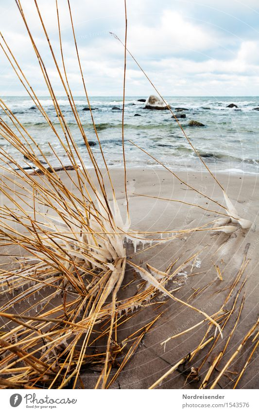 Sky Nature Plant Water Ocean Landscape Clouds Winter Beach Cold Grass Coast Moody Sand Ice Waves