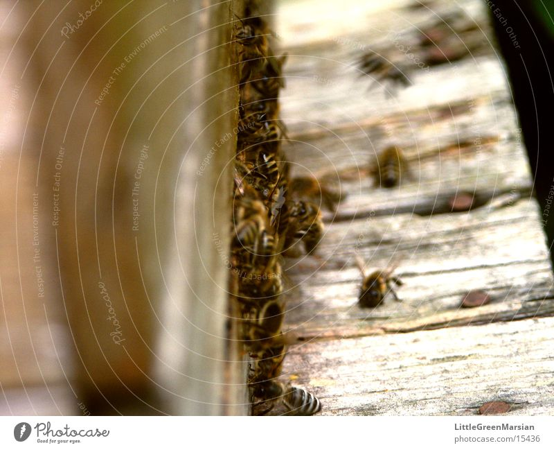 Approach lane [2] Bee Stick House (Residential Structure) Entry hole Insect Wood Box pollen panties