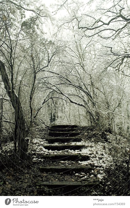 Winter Calm Loneliness Forest Cold Snow Lanes & trails Hiking Walking Stairs Frost Ascending