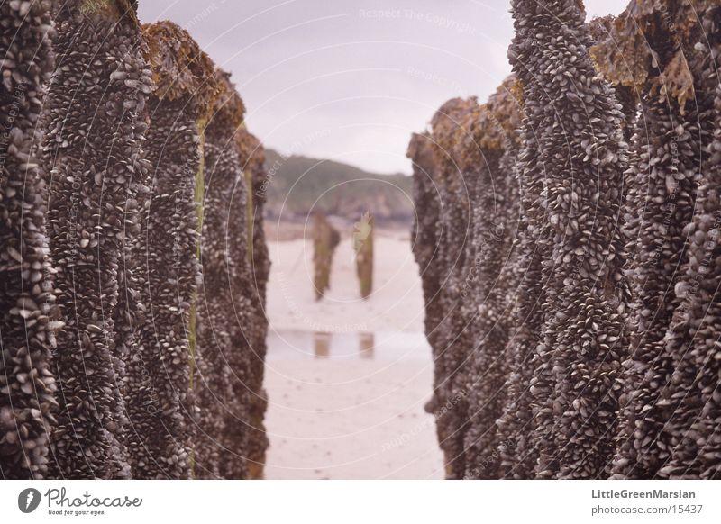 Shell farming 02 Mussel Hallway Beach Infinity Transport Tree trunk
