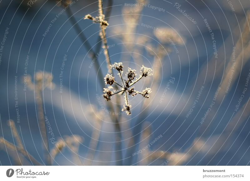 Winter Cold Blue Star (Symbol) Blossom Frostwork Hoar frost Bushes Branch Depth of field Blur Snow