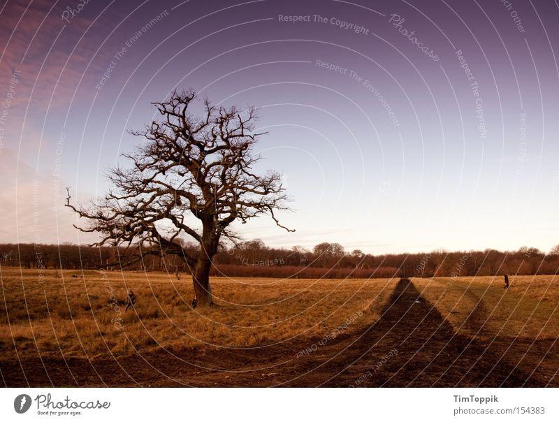 Nature Sky Tree Calm Relaxation Lanes & trails Park Landscape Branch Footpath Twig Denmark Copenhagen