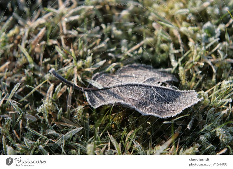 torpor Cold Frost Winter Hoar frost Ice Ice crystal Freeze Frozen Leaf Grass Lawn Snow