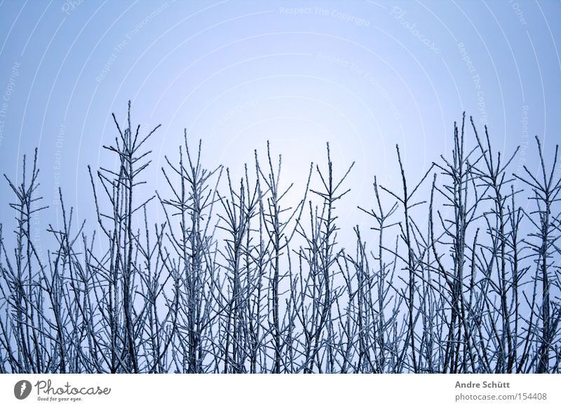 Nature Sky Tree Blue Winter Snow Branch Seasons Beautiful weather Twig