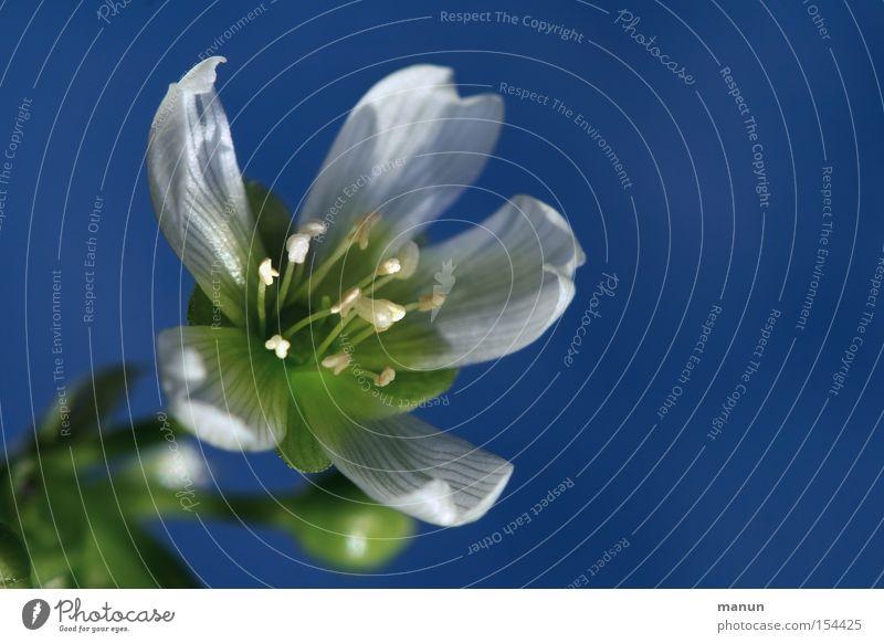 Venus Winter Blossom Blossoming White Blue Nature Beautiful Spring Cold Colour Venus' flytrap winter flowering plants